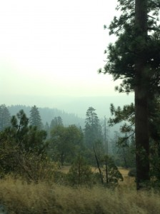 fumee route 108 Rim Fire